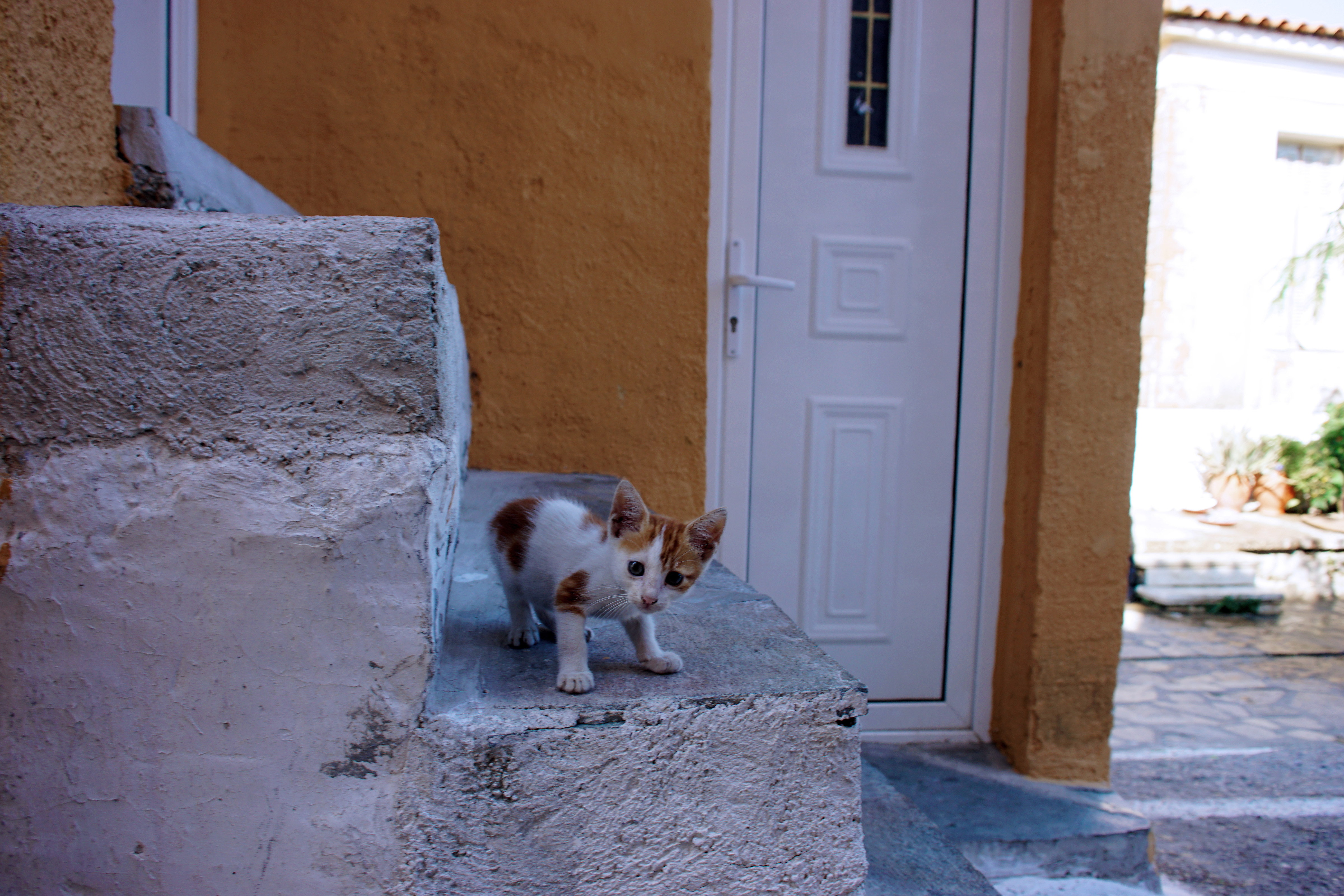 Samos-Greek-Cats46