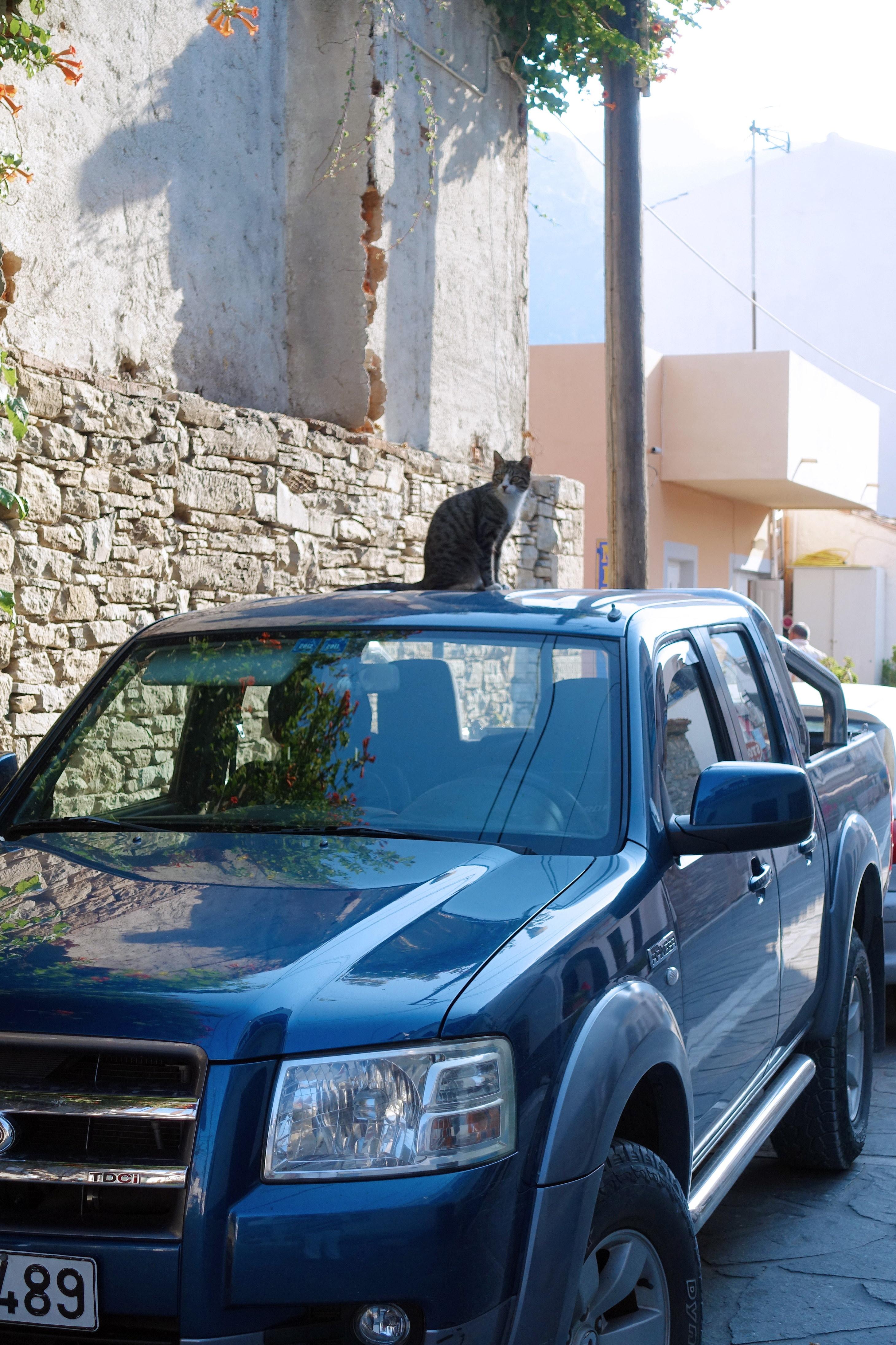 Samos-Greek-Cats51