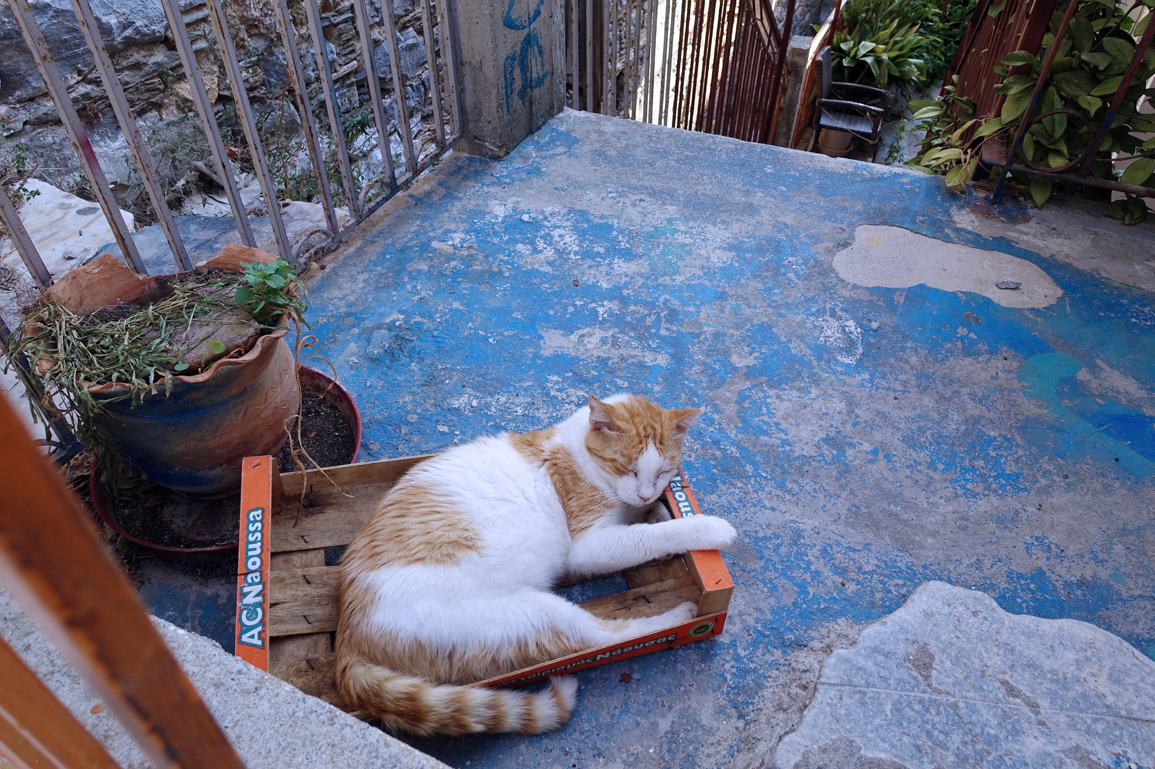 Samos-Greek-Cats52