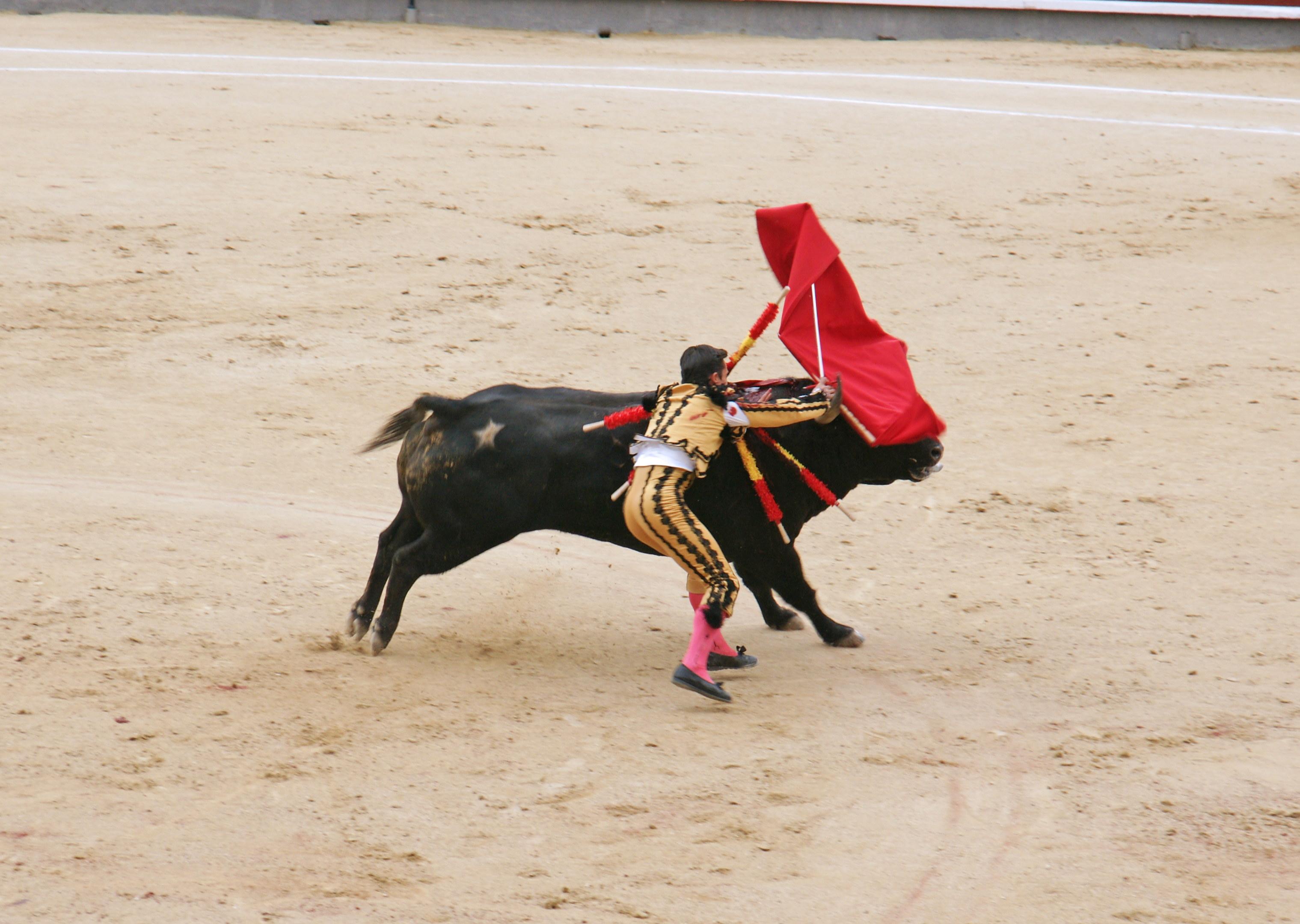 Tauromaquia-Bull02