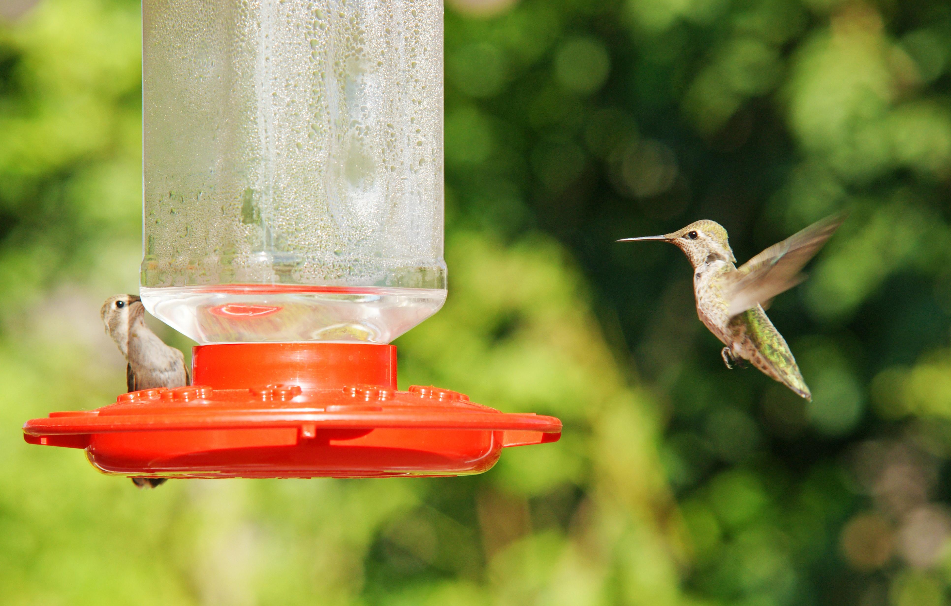 HummingbirdGallery01