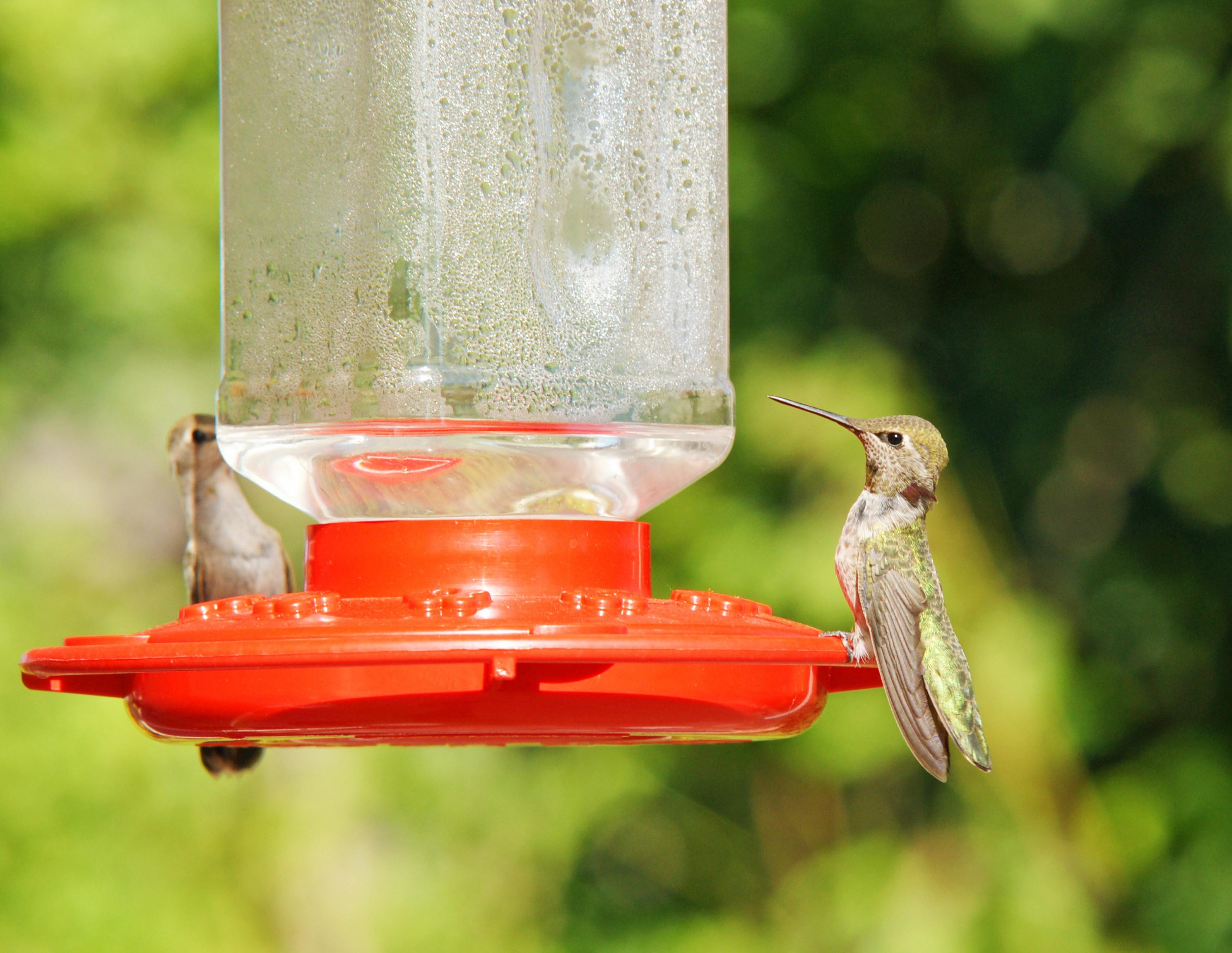 HummingbirdGallery02