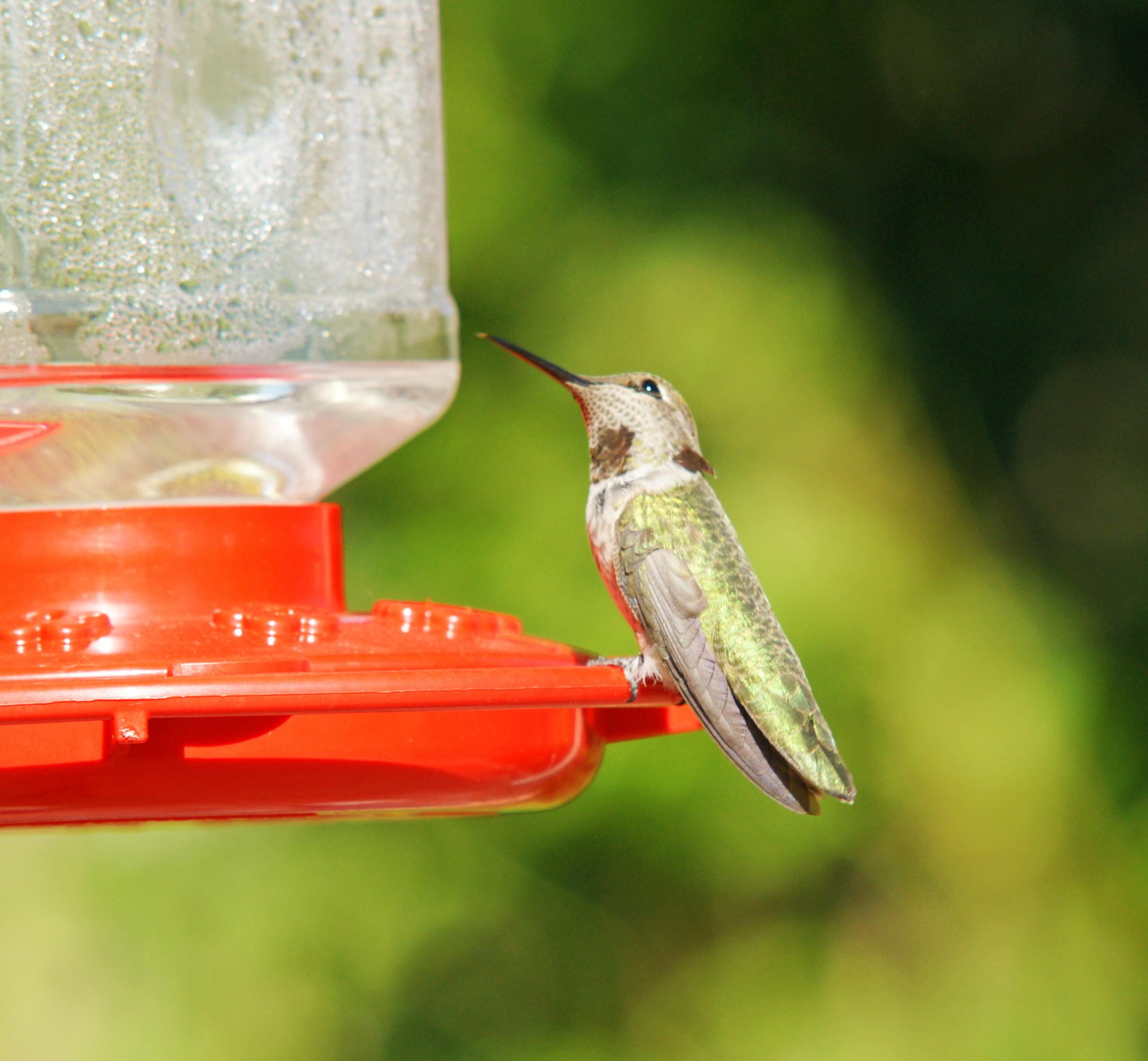 HummingbirdGallery03