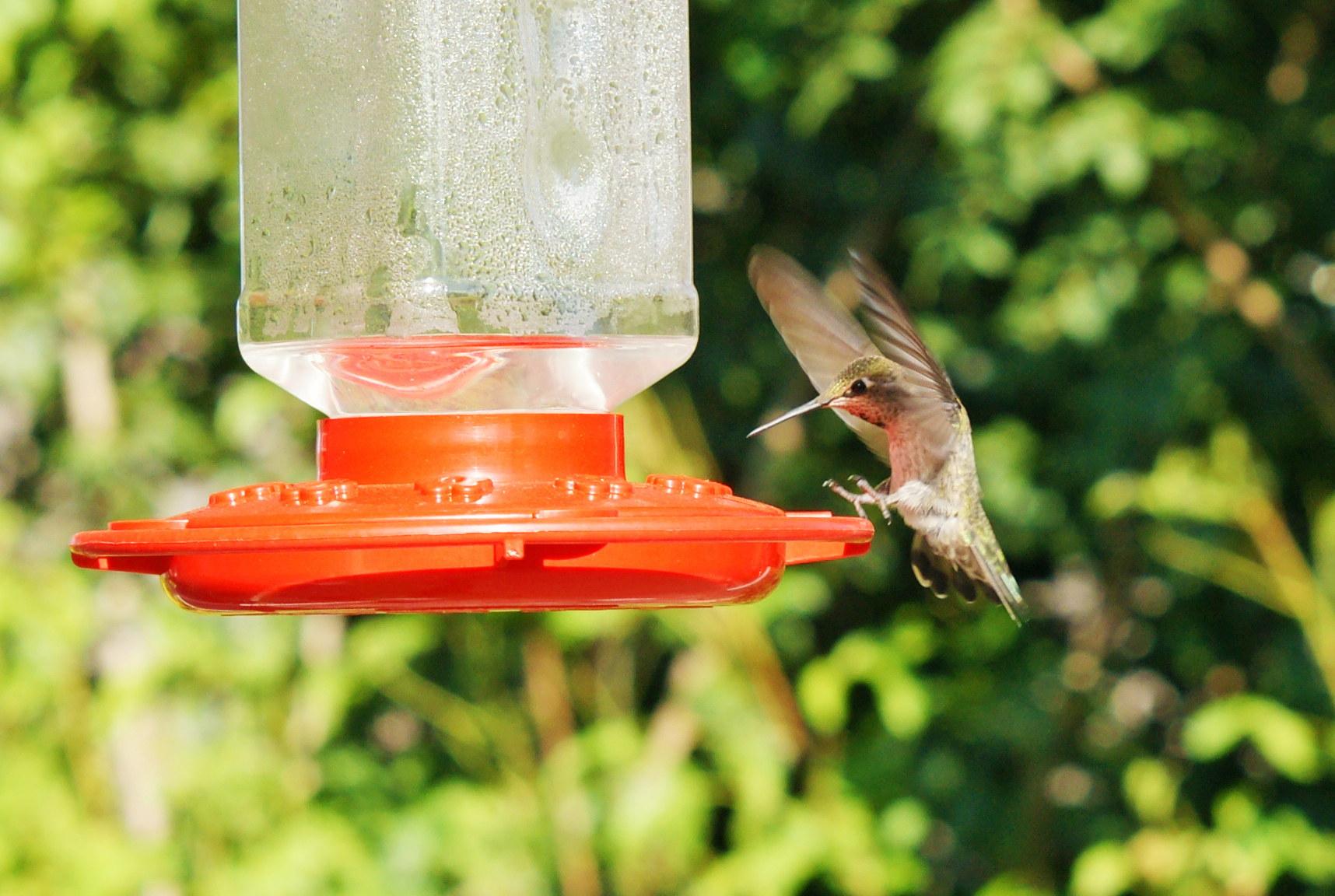 HummingbirdGallery06