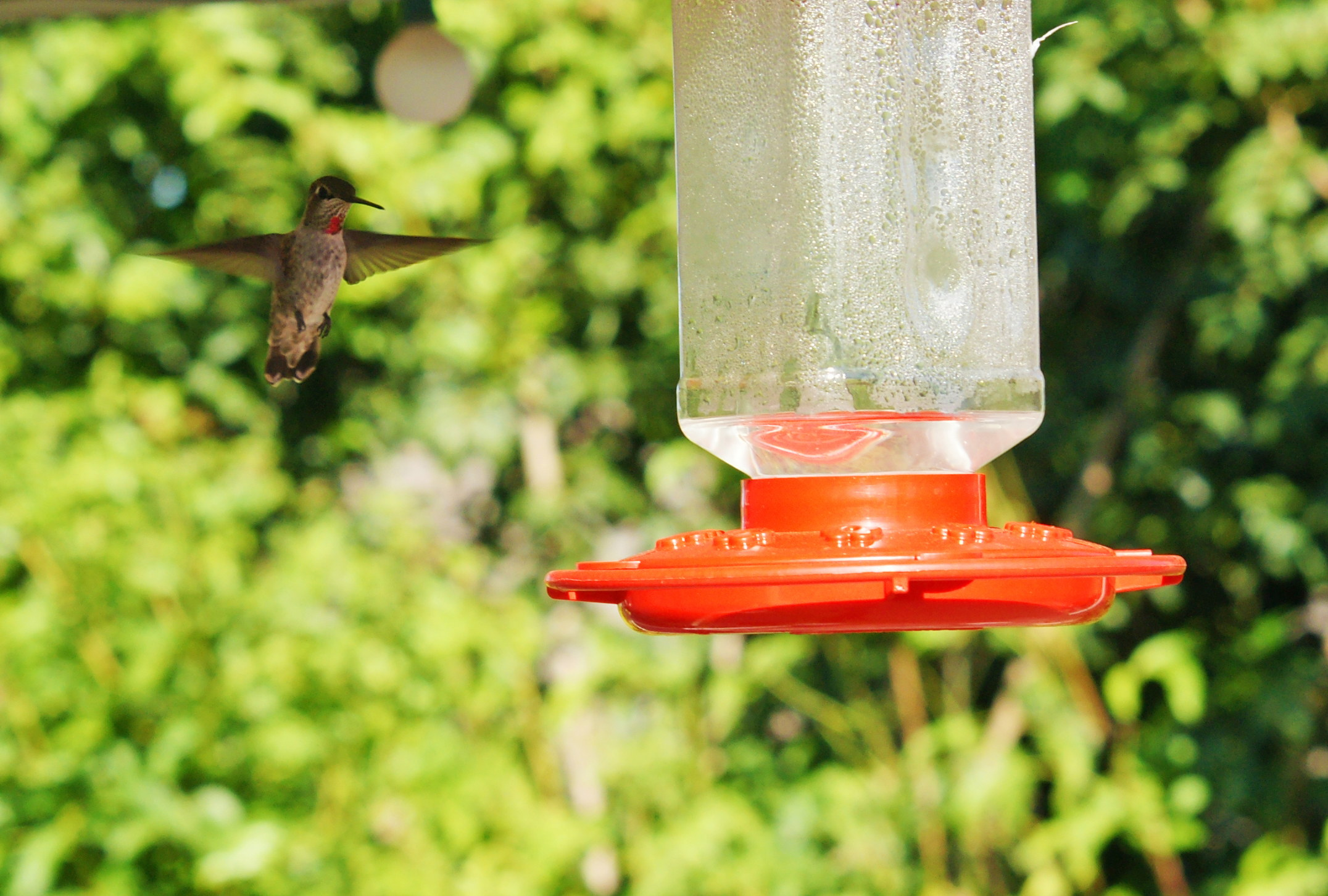 HummingbirdGallery07
