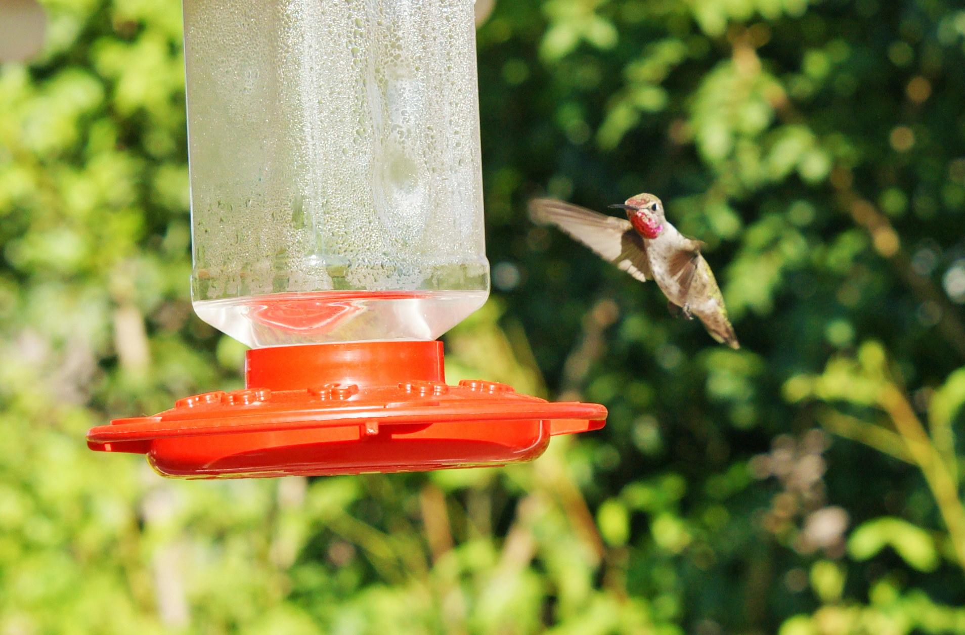 HummingbirdGallery10