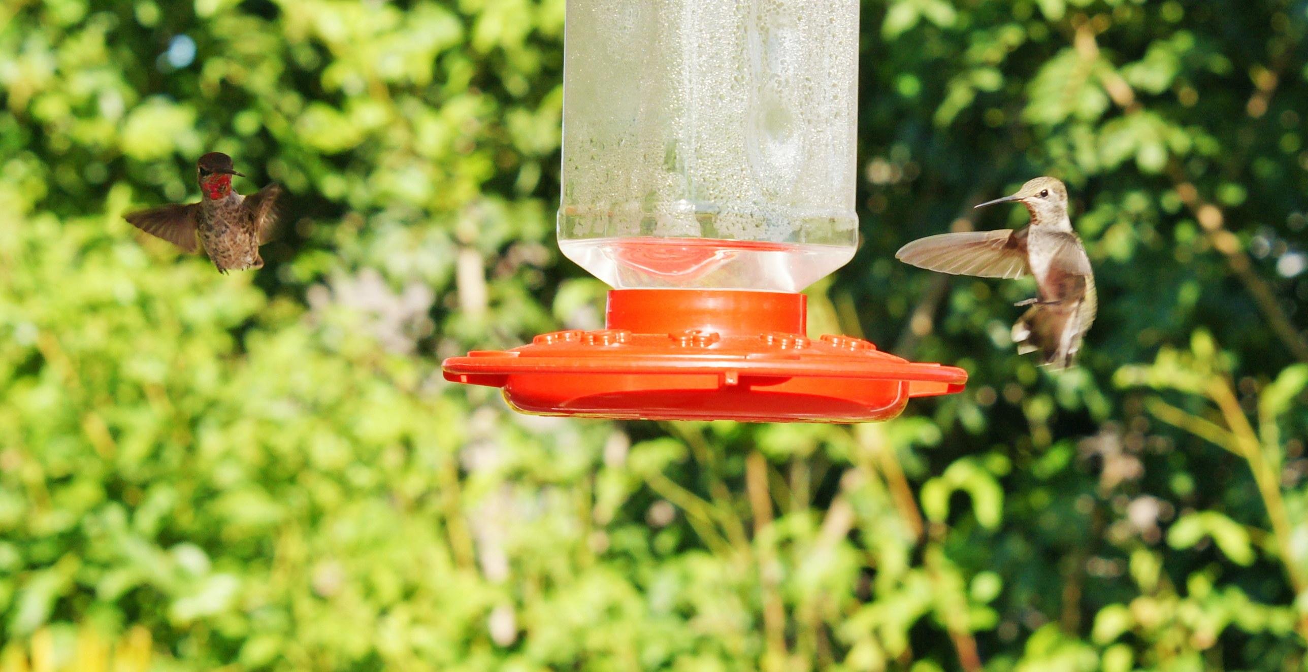 HummingbirdGallery11