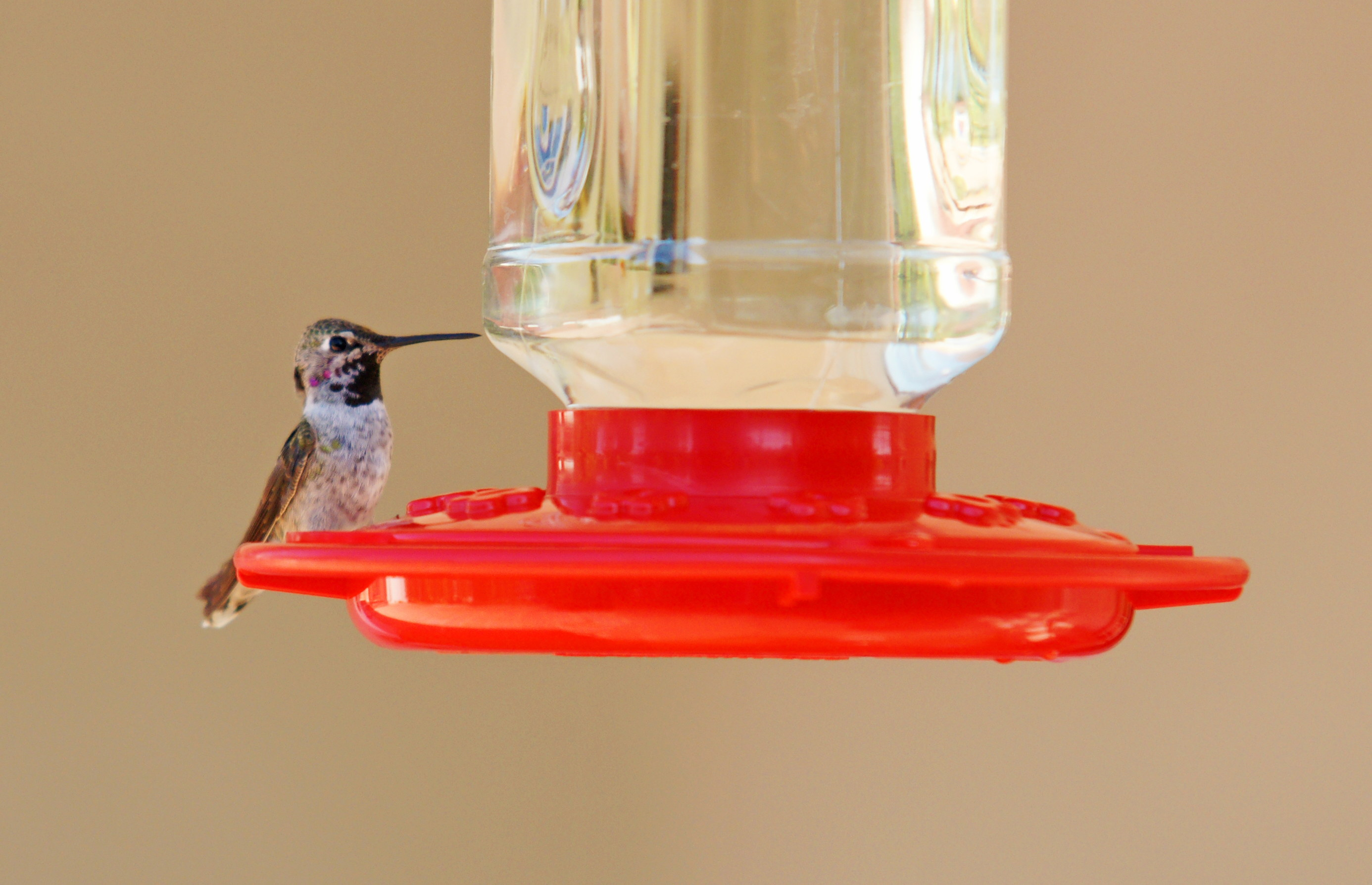 HummingbirdGallery12