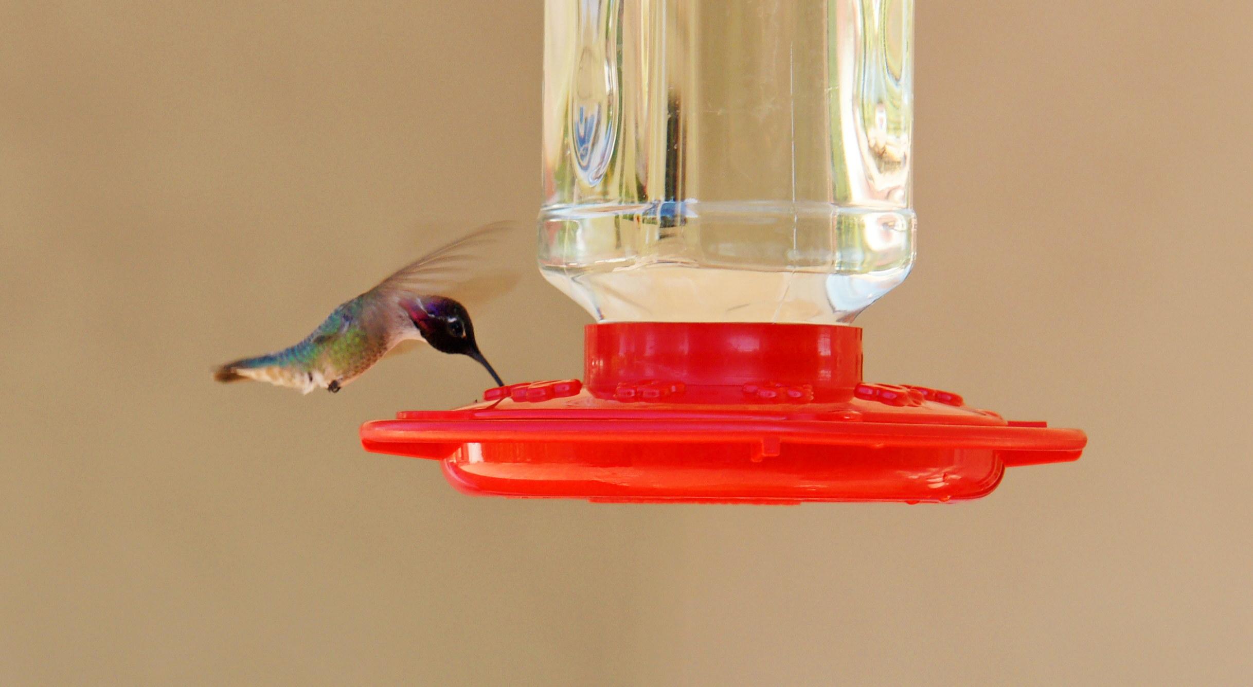 HummingbirdGallery13