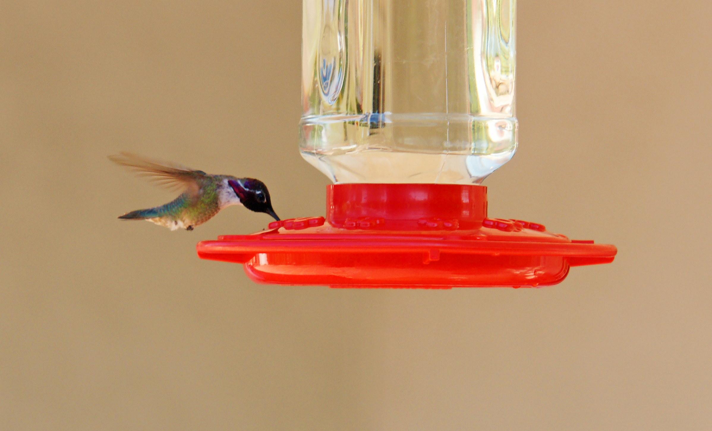 HummingbirdGallery14