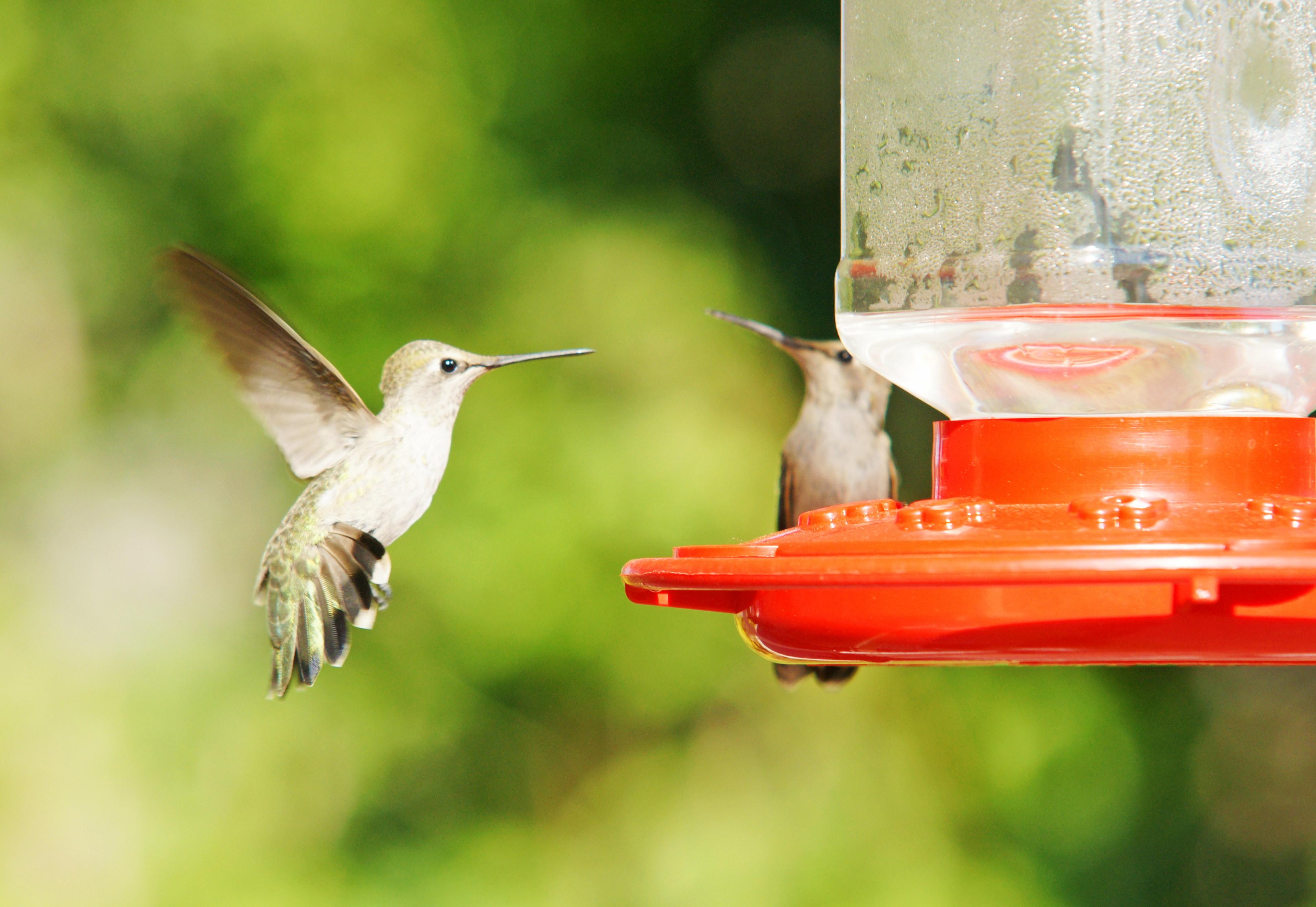 HummingbirdsGallery01