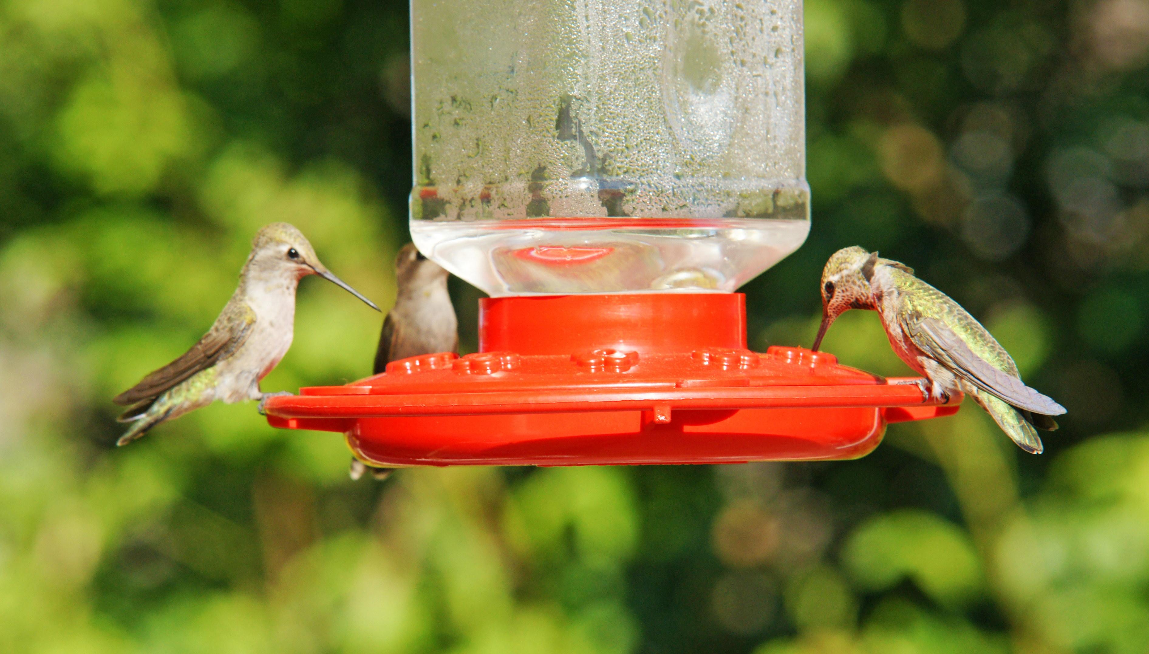 HummingbirdsGallery02