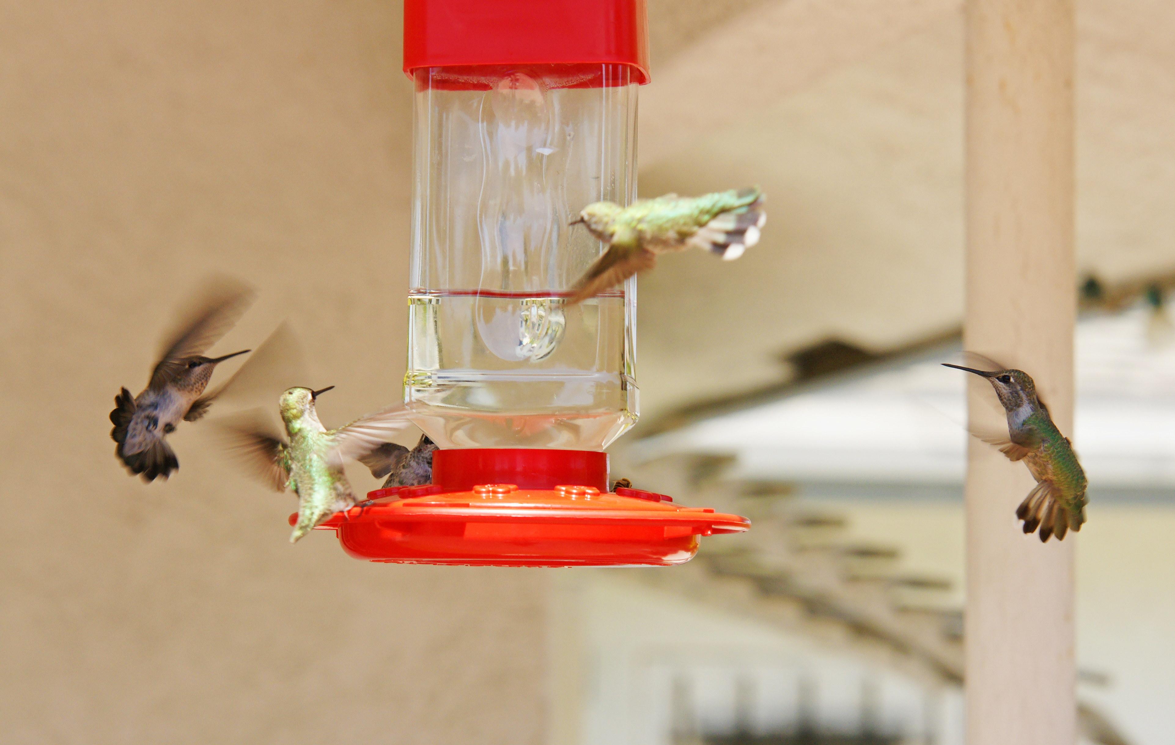 HummingbirdsGallery13