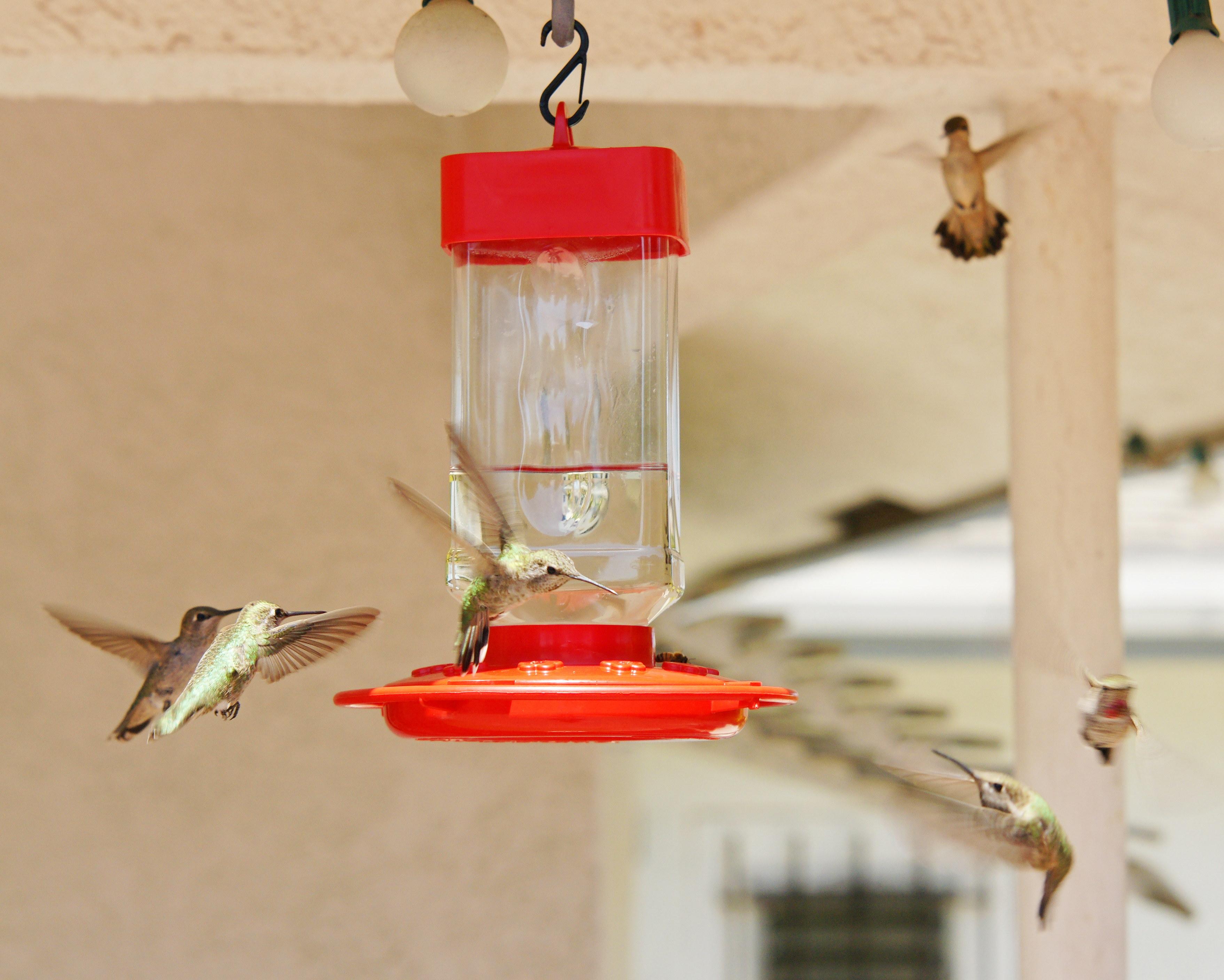 HummingbirdsGallery14