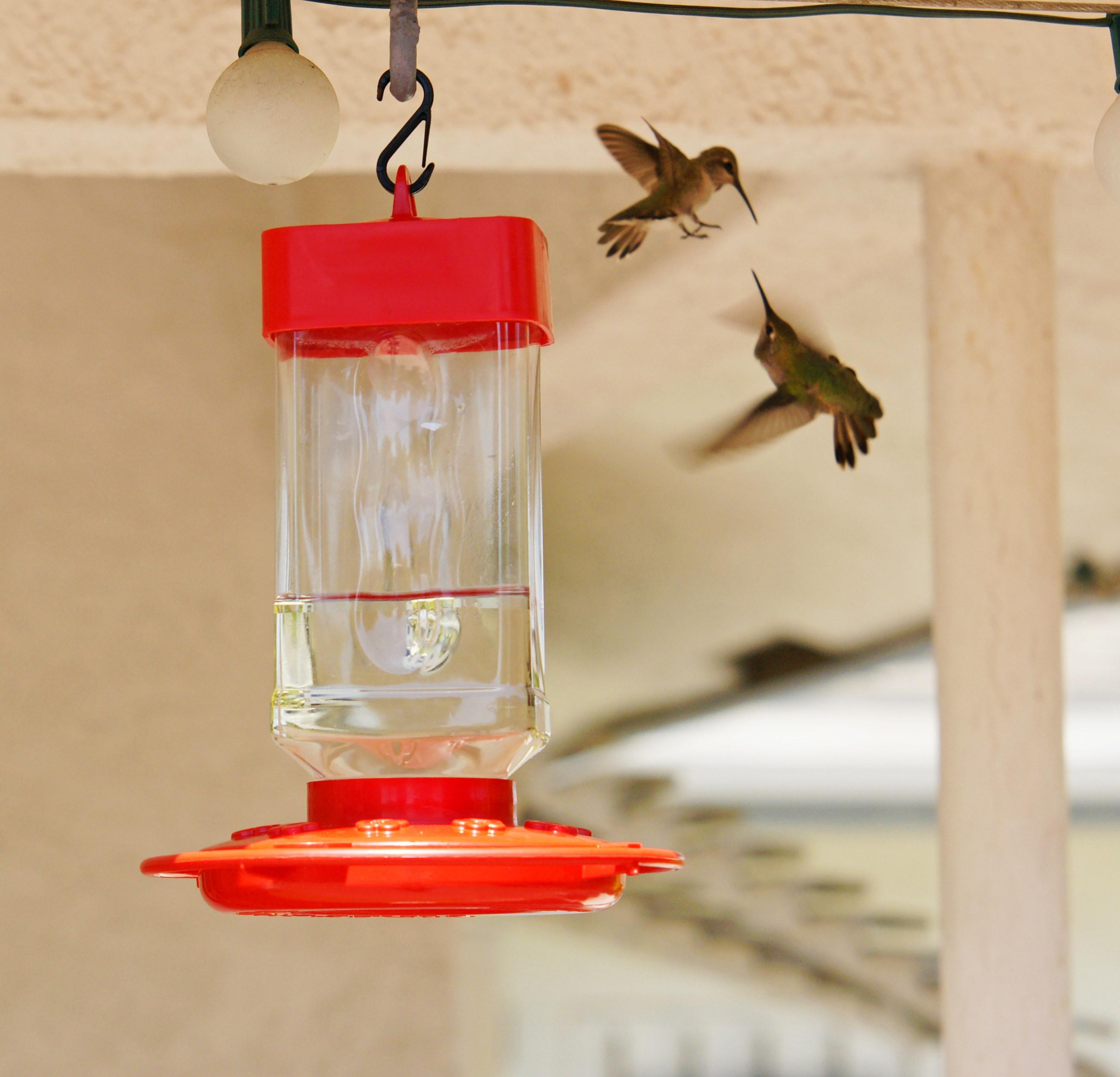 HummingbirdsGallery16