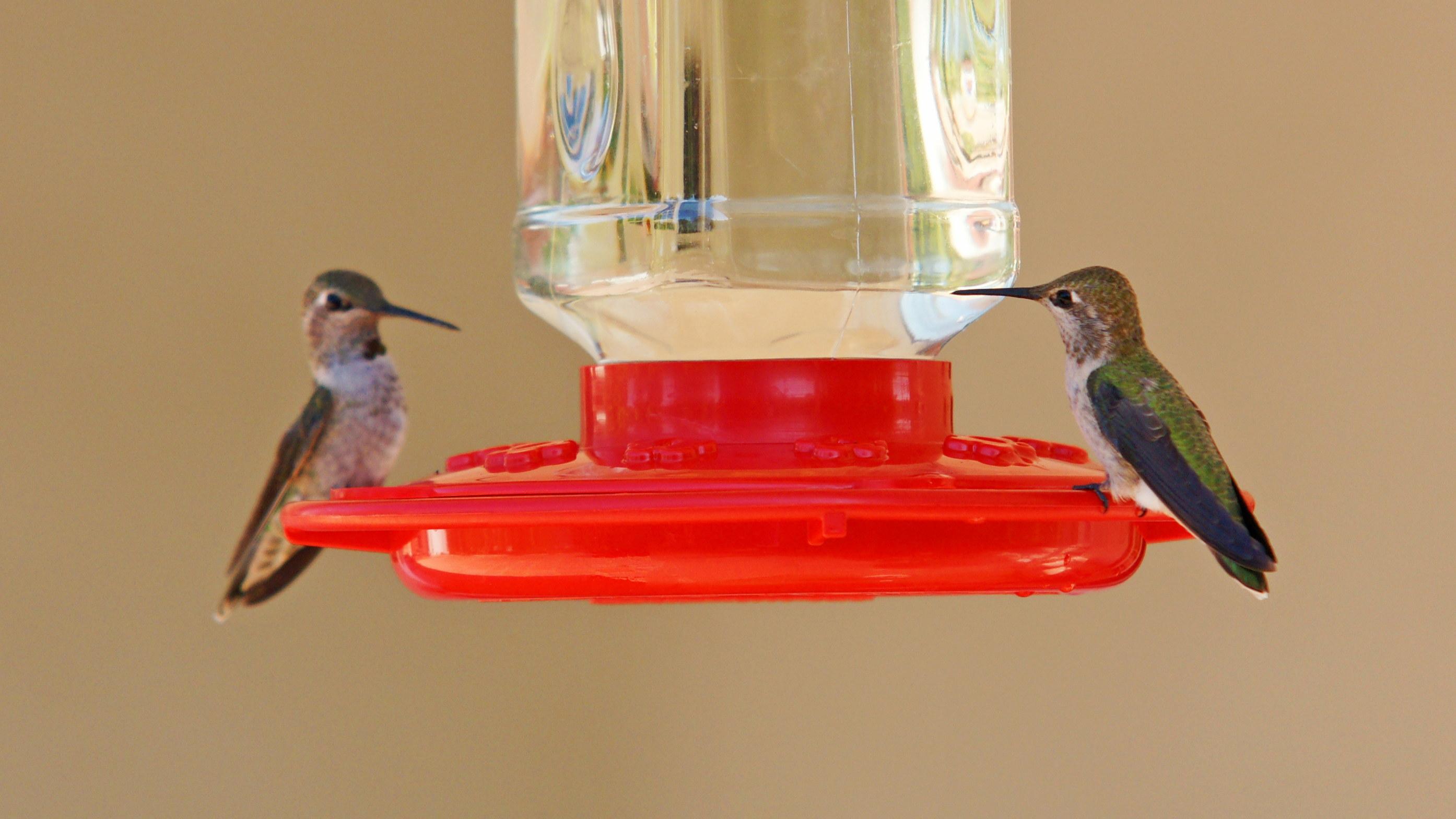 HummingbirdsGallery19