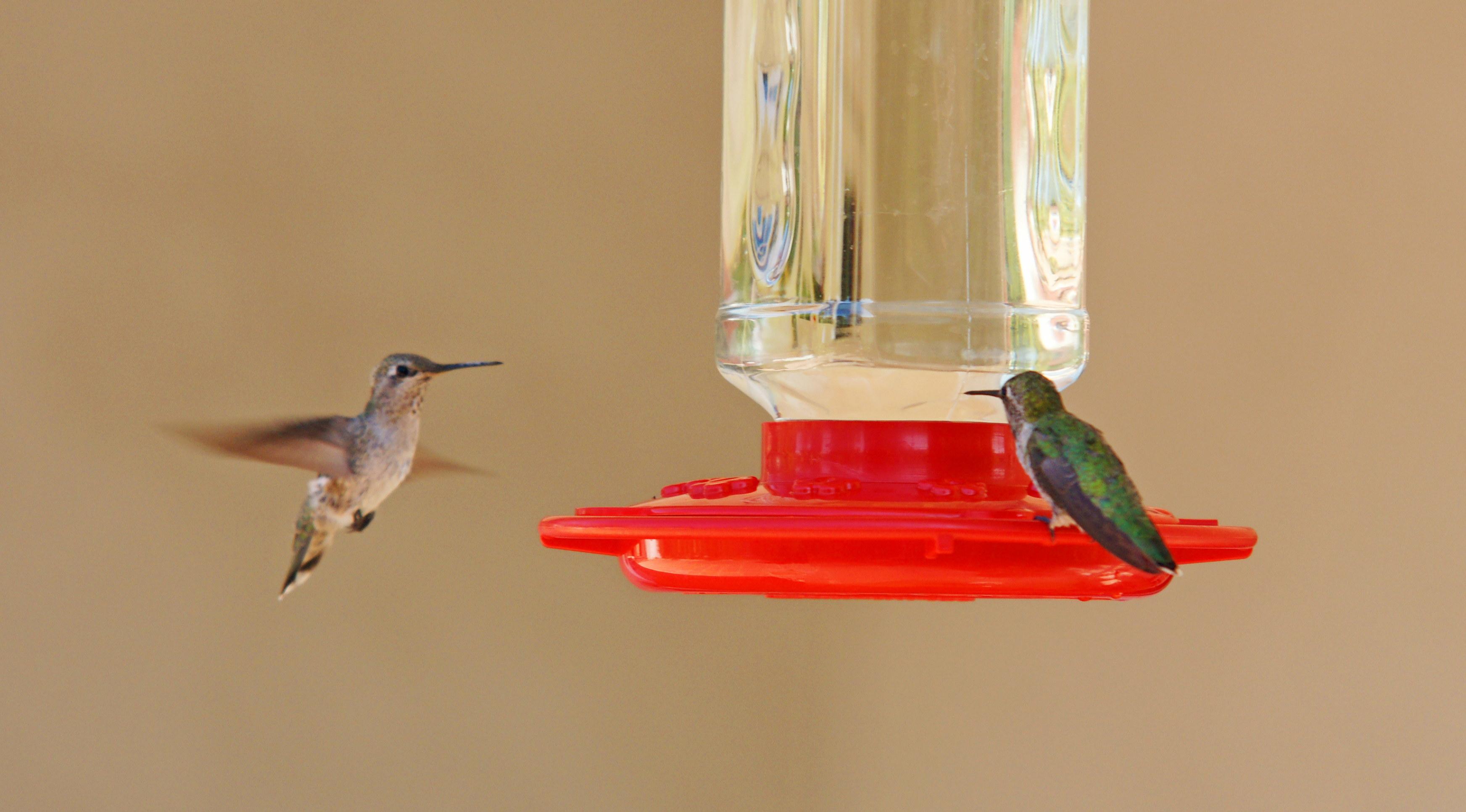 HummingbirdsGallery21
