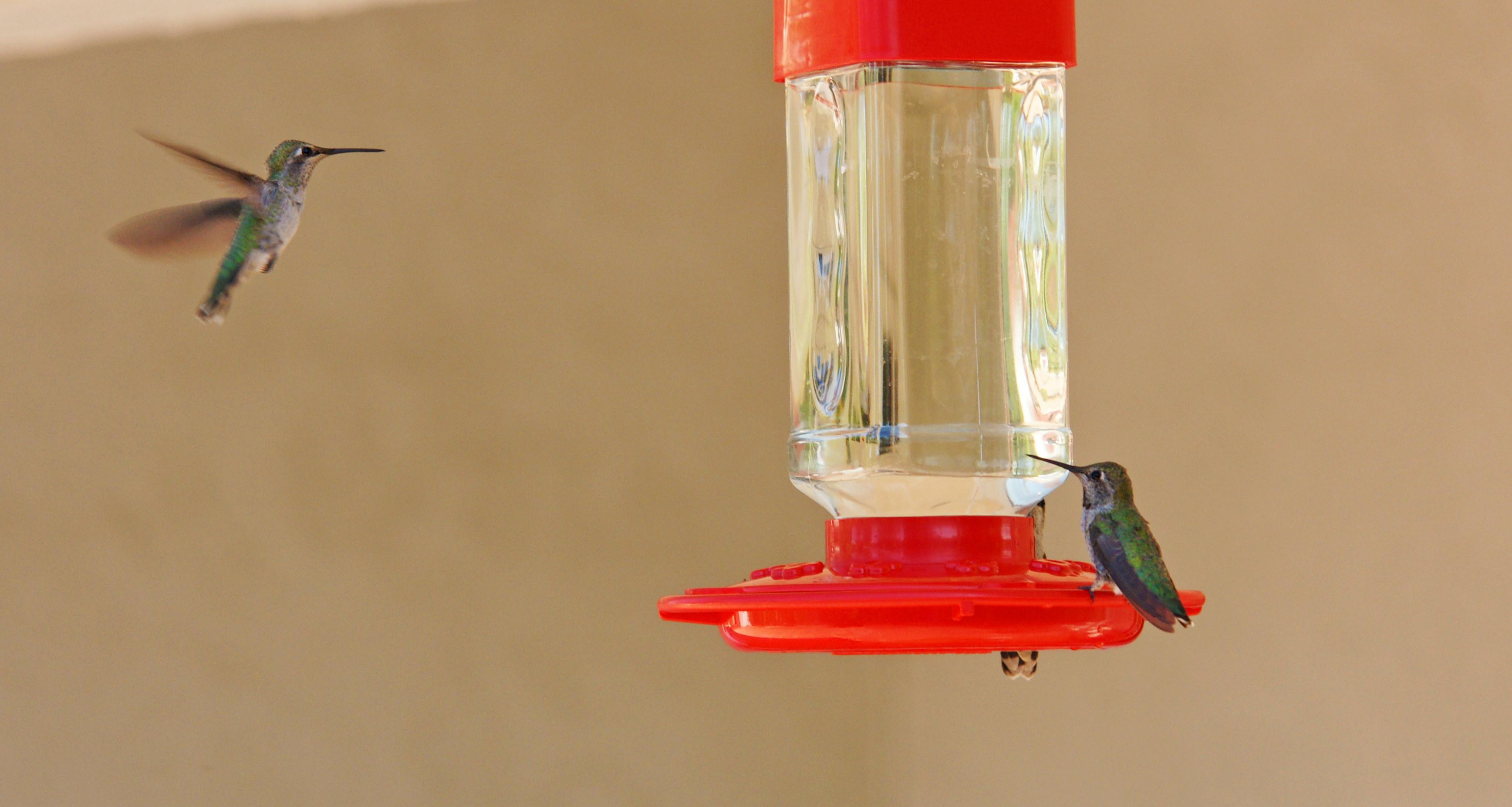HummingbirdsGallery24