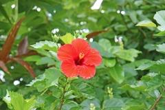 PlantsGallery02