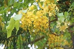 PlantsGallery09