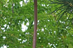 PlantsGallery10