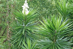 PlantsGallery17