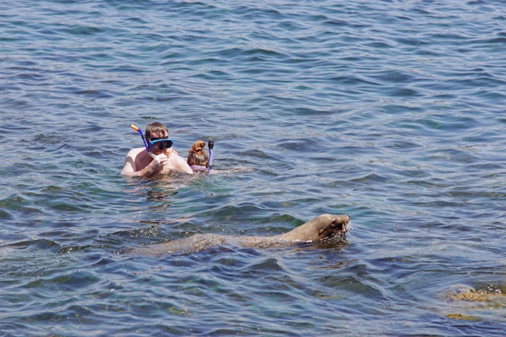 Snorkel with sea lions.