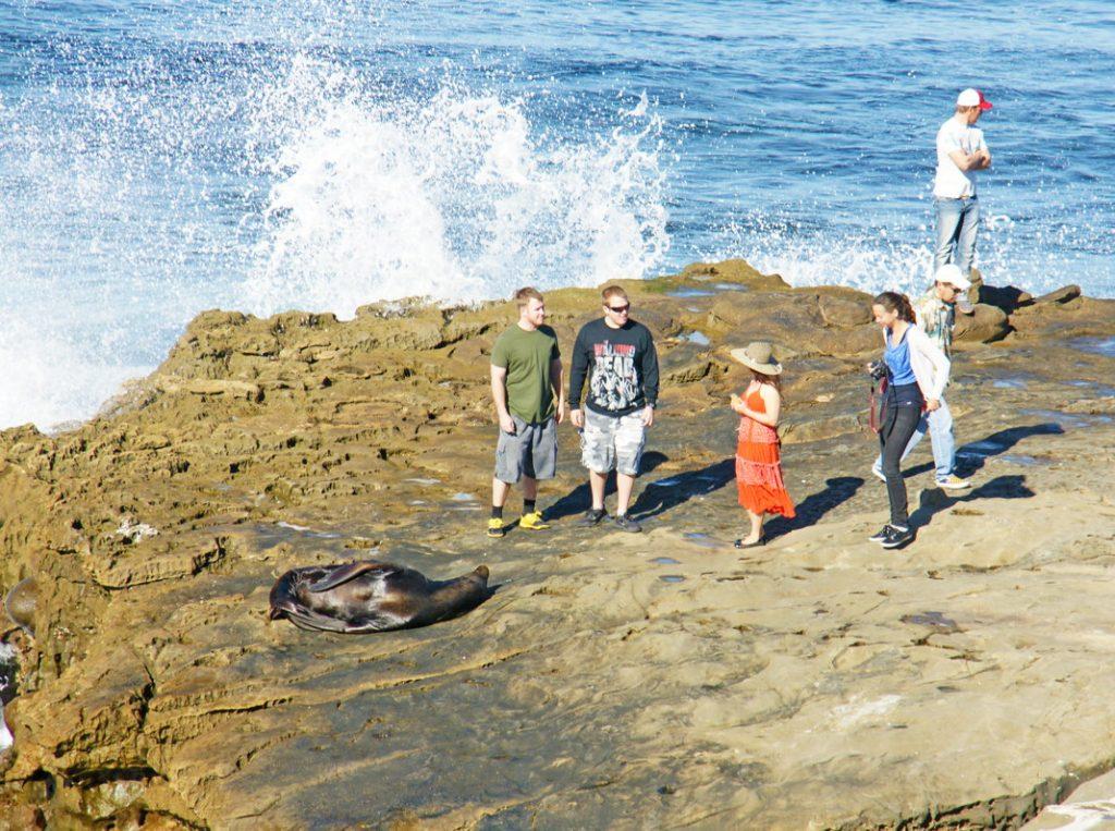 Stand too close to a sea lion.
