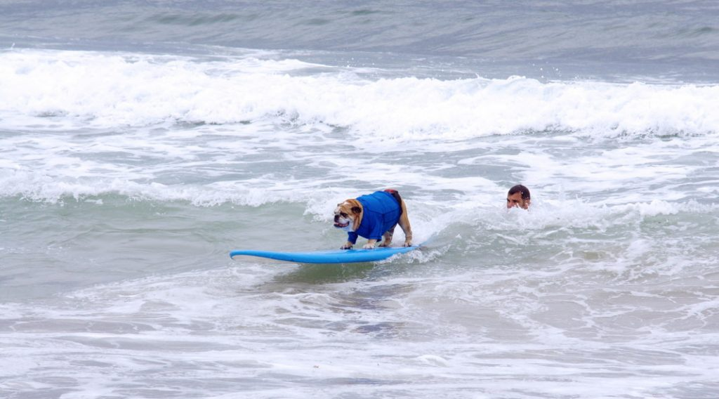 Take your dog surfing.