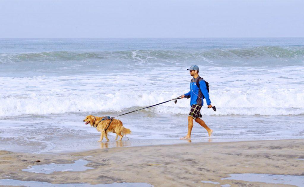 Take your dog for a walk at dog beach.