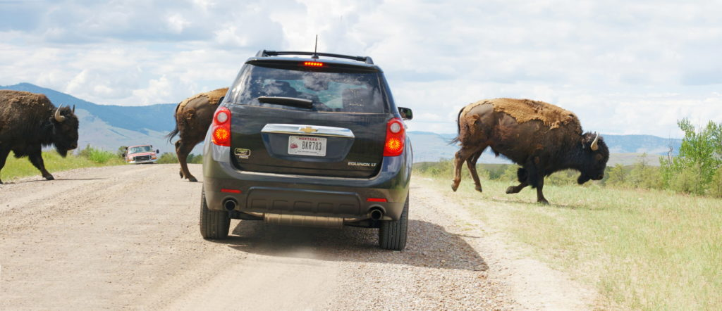 Danger: Bison crossing.