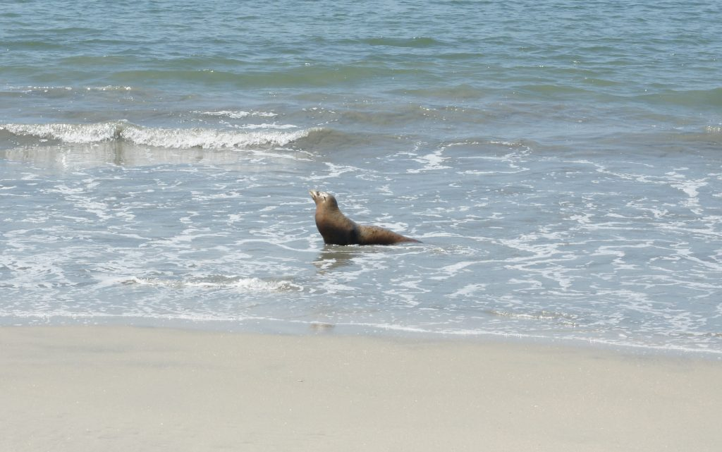 Sea lions are casual.