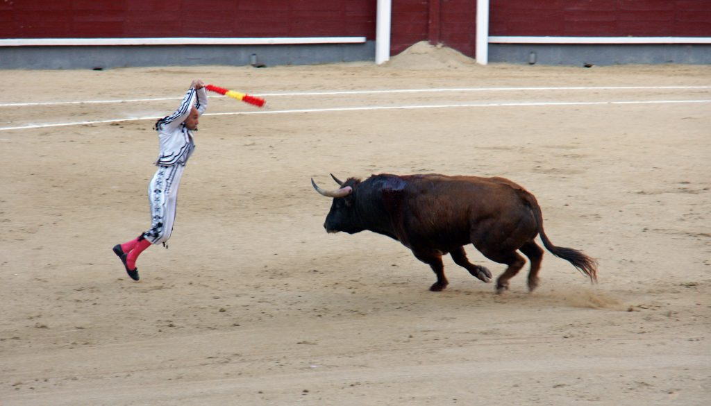 The bull charges!