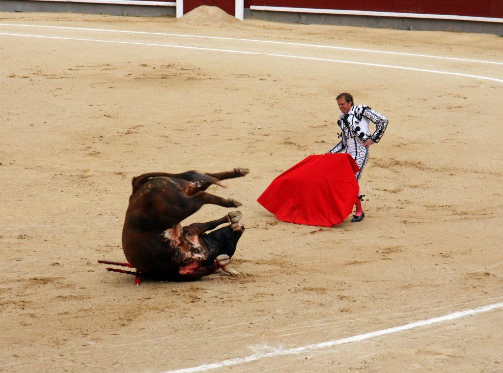 The bull tumbles.