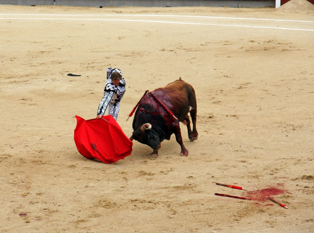 The bull charges weakly.