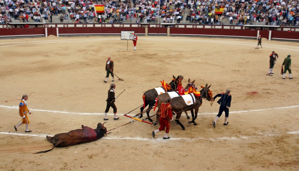 The ring is prepared for the next bullfight.