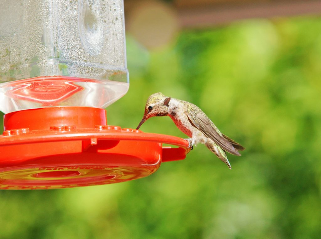 Hummingbirds can eat and drink at the same time.