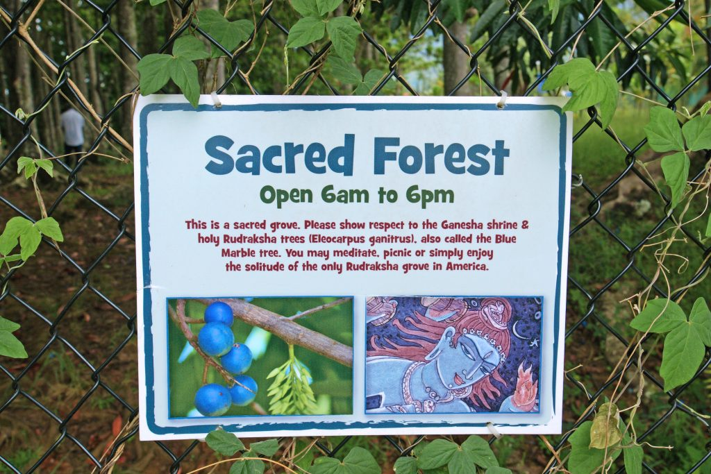The Sacred Forest, where you can meditate for only 12 hours each day.