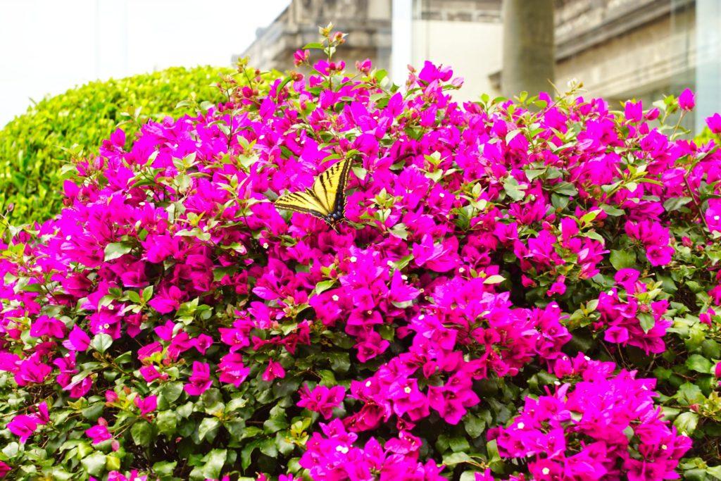 Butterflytopia.