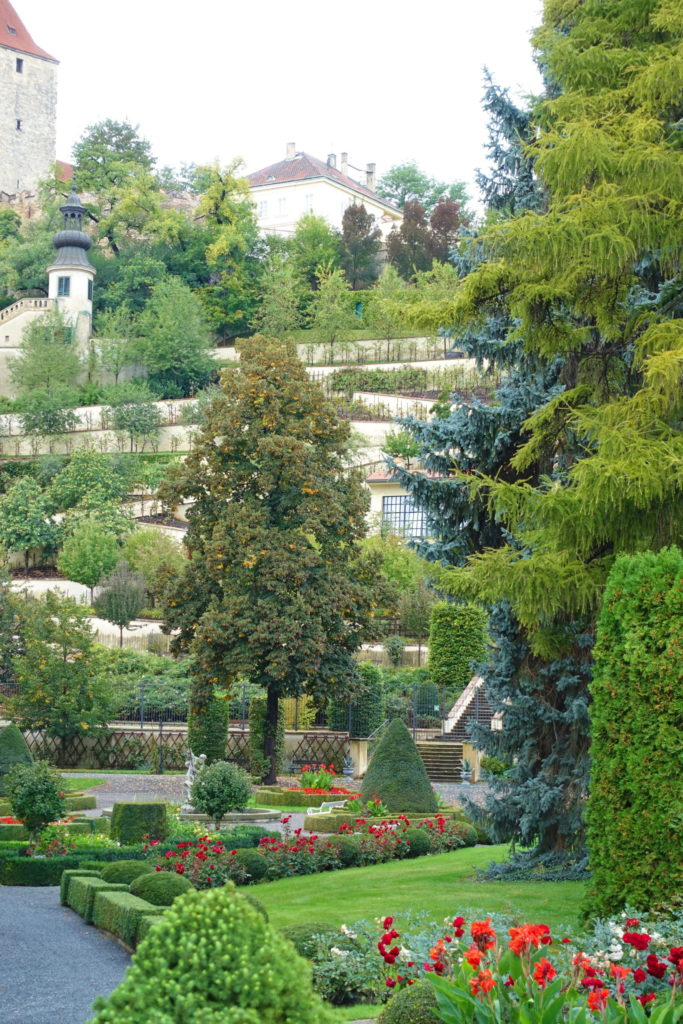 The garden holds many different species of trees.