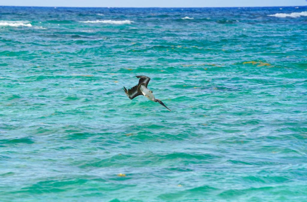 Avian attack ship.